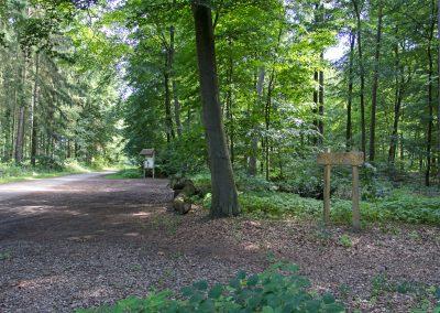 Wellborg-Bestattungen_Ruheforst_Kirchlinteln_102