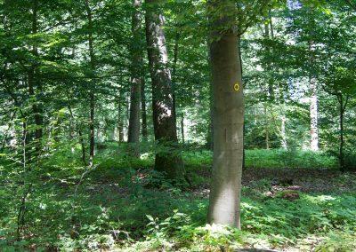 Wellborg-Bestattungen_Ruheforst_Kirchlinteln_113