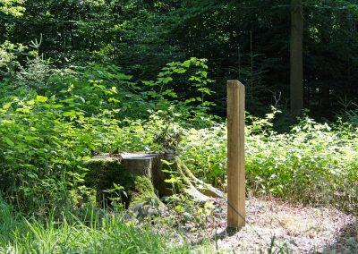 Wellborg-Bestattungen_Ruheforst_Kirchlinteln_137